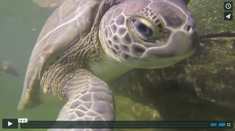 The Marathon Turtle Hospital–a Junior Captains Preview