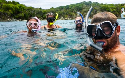 It's Not Every Day We Swim with Sea Turtles, Just Every Other Day (Video)